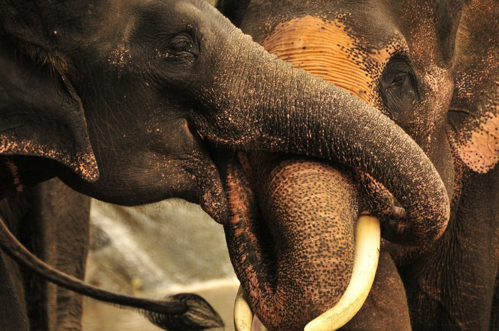 Elefanti in parcul Doi Inthanon, Chiang mai