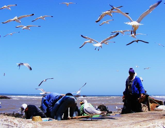 circuit maroc Essaouira