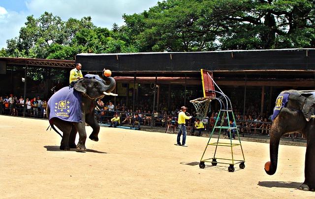 Pattaya - parcul elefantilor
