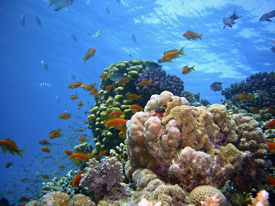 recifi de corali
