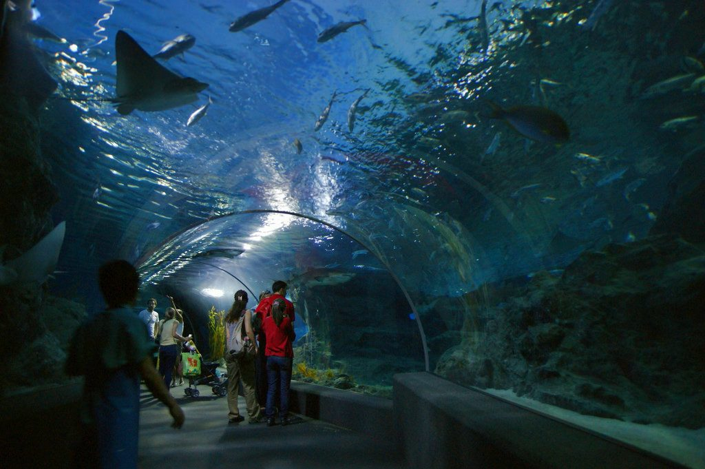 Siam Ocean World - Thailanda 2017