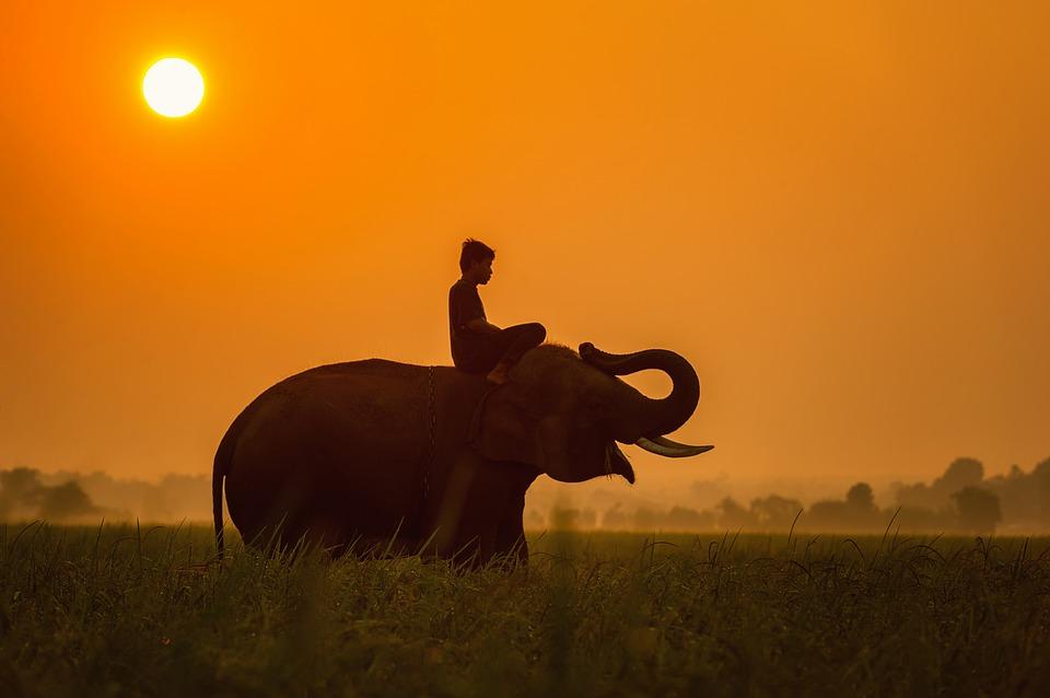 Parcul Elefantilor Bali