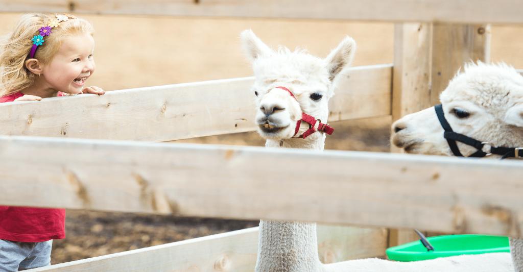 Destinatii de vacanta pentru familiile cu copii- gradini zoologice Europa
