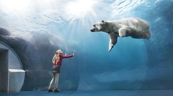 Gradina Zoologica Copenhaga,ursul polar inotand