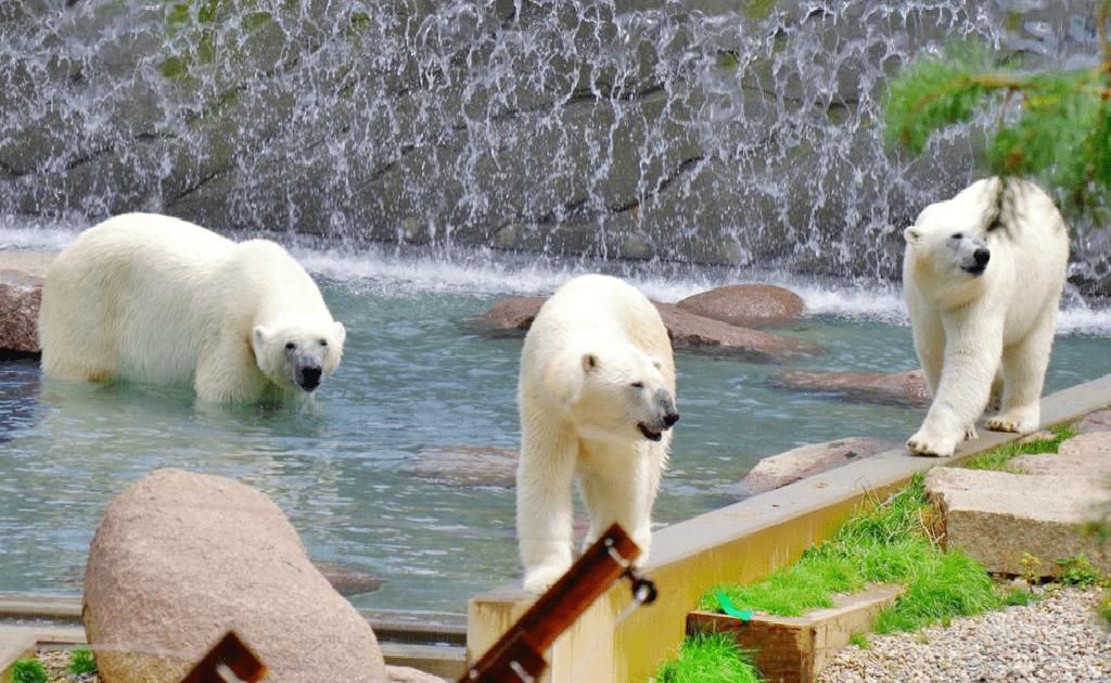 Obiective turistice Mulhouse - Gradina Zoologica si Botanica