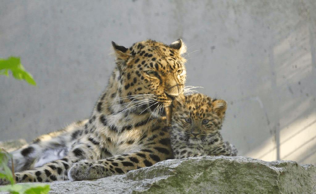 Obiective turistice Tallinn - Zoo Tallinn
