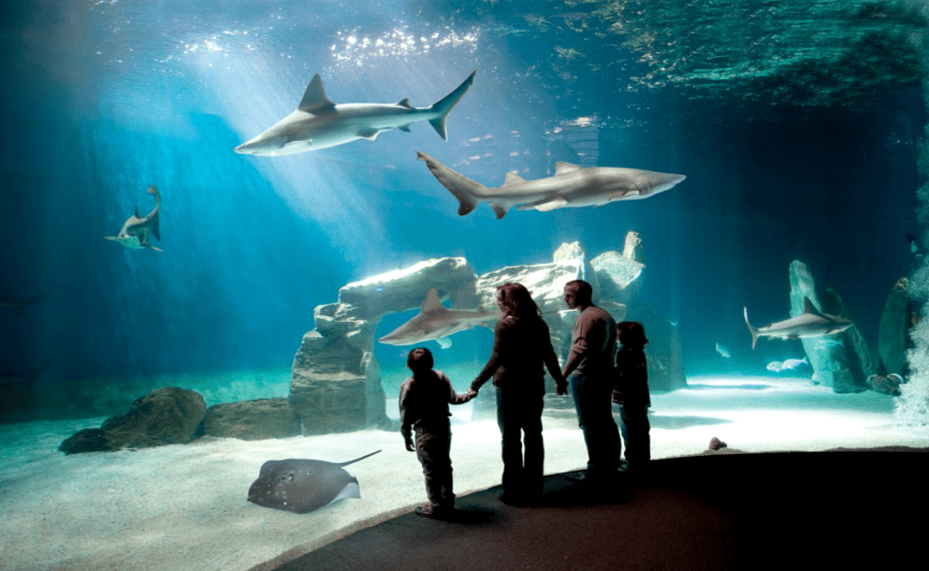 Obiective turistice Genova - Aquarium