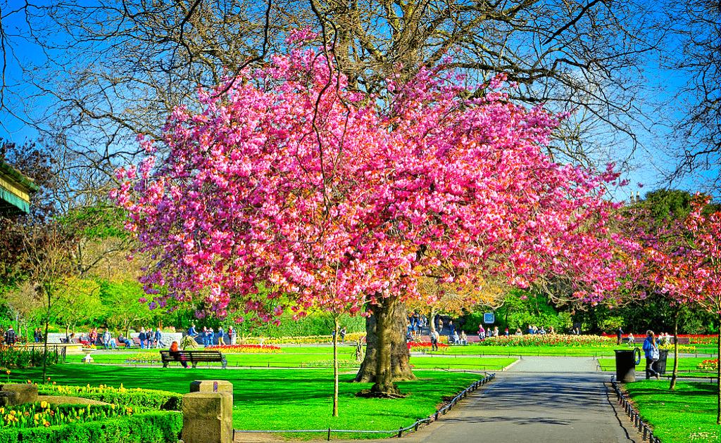 Obiective turistice Dublin - Parcul St. Stephen