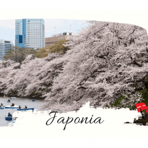 Festivalul Ciresilor Infloriti – Japonia, 2019. Mergeti?