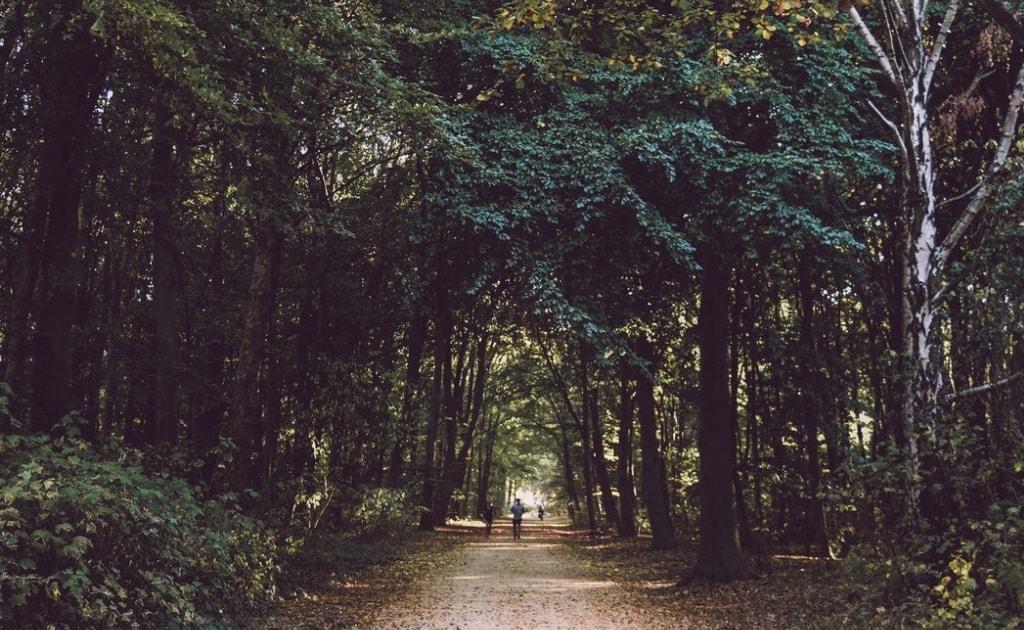 Obiective turistice Berlin - Parcul Tiergarten