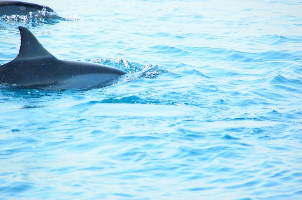 Delfini in Bali
