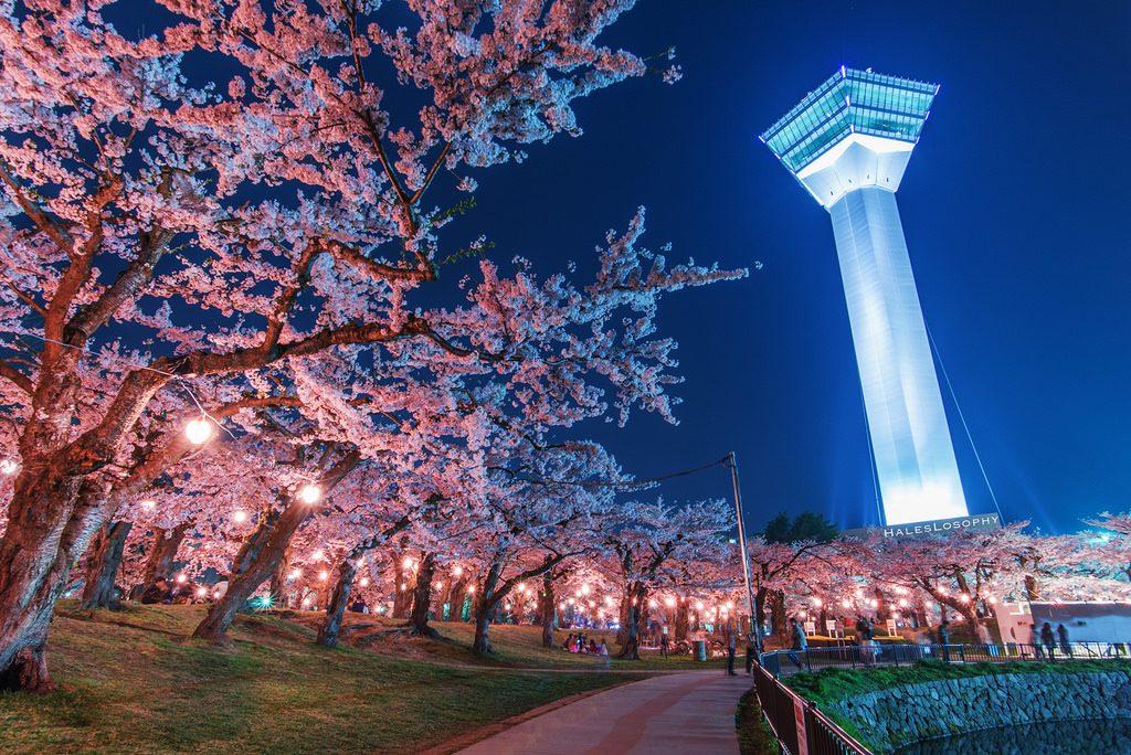 Goryokaku - in timpul Festivalului Japonez al Ciresilor infloriti