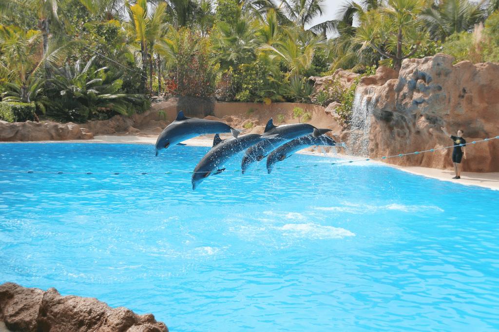 Gradina zoologica Loro Park - Tenerife