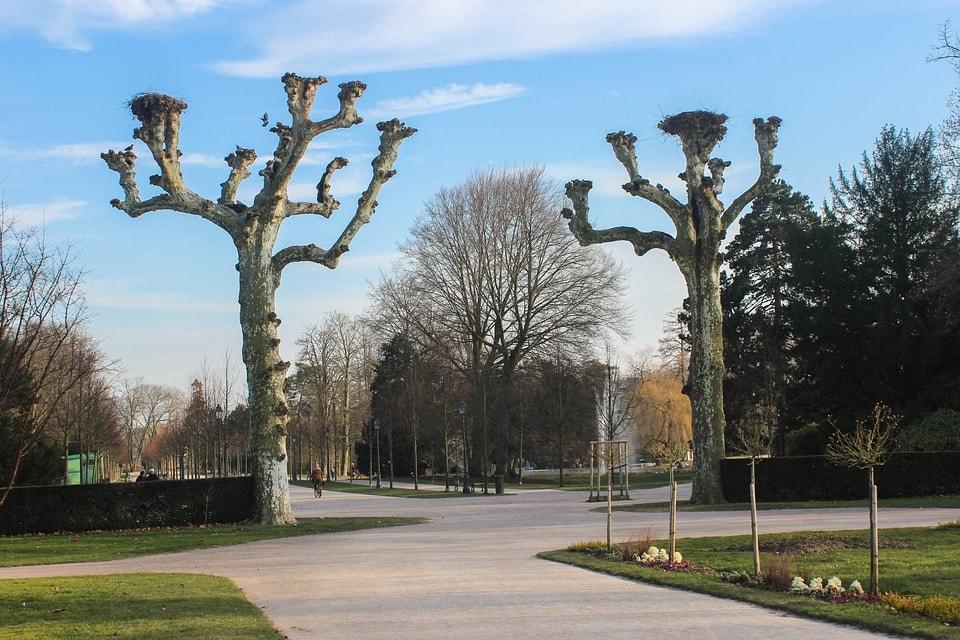Parc de l'orangerie - obiective turistice Strasbourg