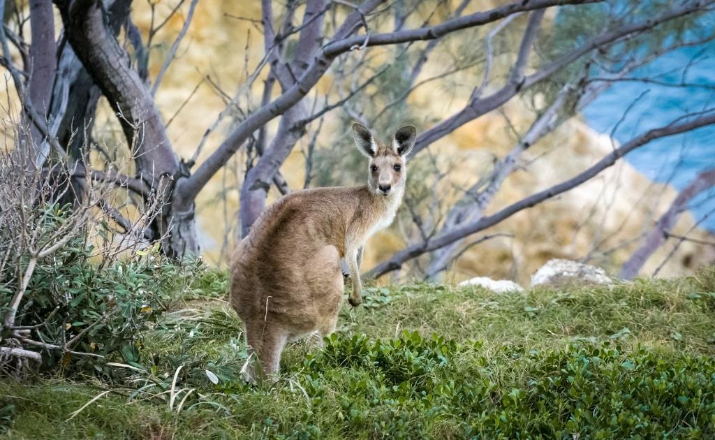Parcul National Kakadu atractii si obiective turistice Australia